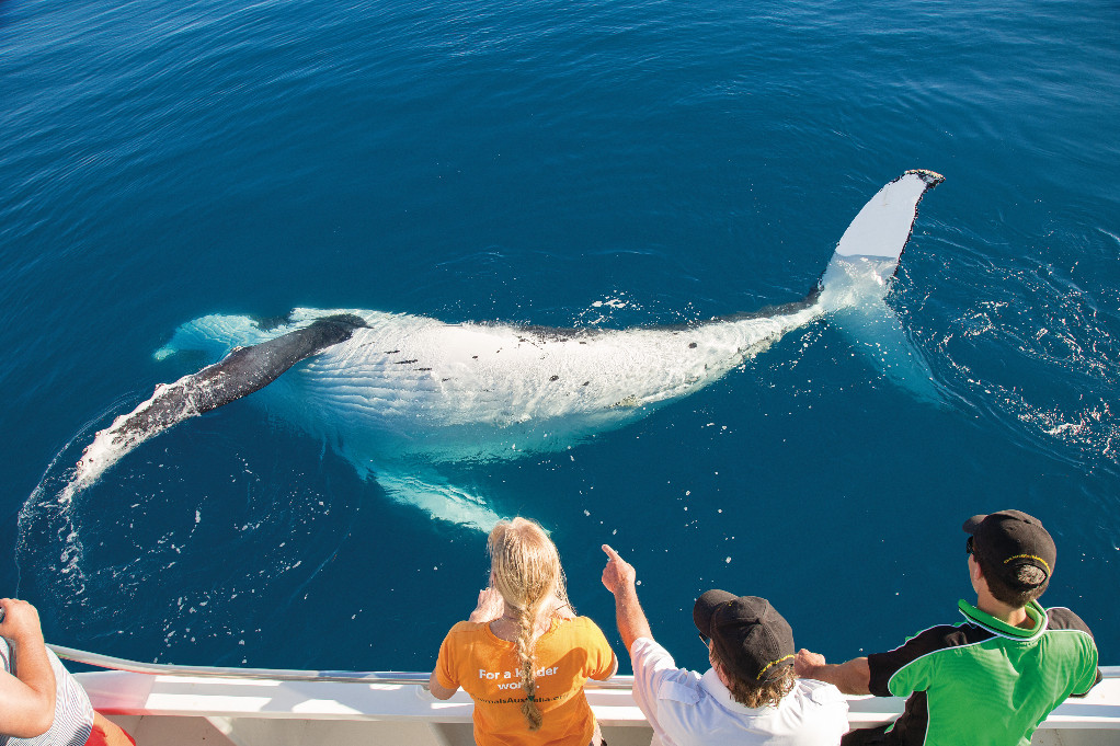 Whale swimming by boat on Whale Watching Tour at the Gold Coast